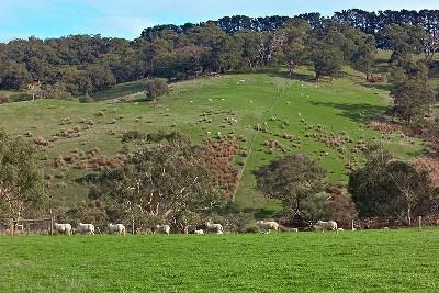 乳畜业和大牧场放牧业的区别_大牧场放牧业的问题与措施_留守儿童问题调查结果分析及措施