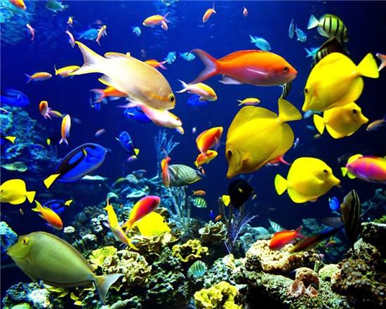 大堡礁栖息着400多种海洋软体动物和1500多种鱼类