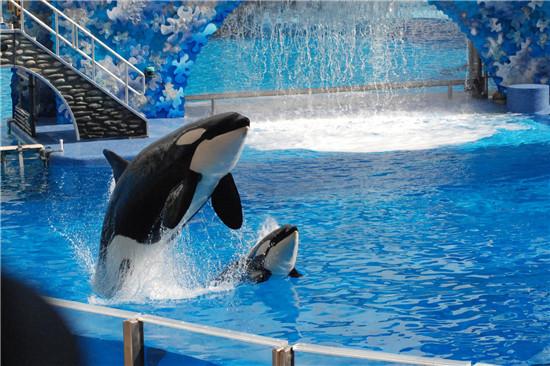 壁纸 动物 海底 海底世界 海洋馆 鲸鱼 水族馆 550_366