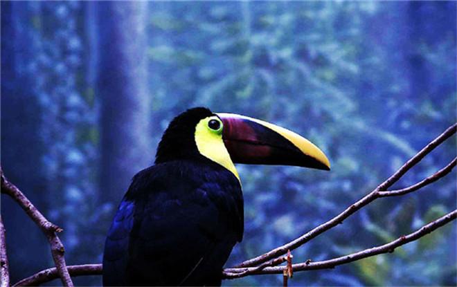 探秘亚马逊热带雨林 神秘与梦幻的终极乐园