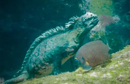 壁纸 动物 海底 海底世界 海洋馆 水族馆 鱼 鱼类 500_323