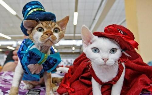 乌克兰举行猫咪秀 各品种猫咪缤纷亮相