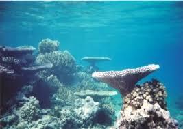 斐济KORO LEVU岛拥有极其美妙的自然环境和珍贵的海洋资源