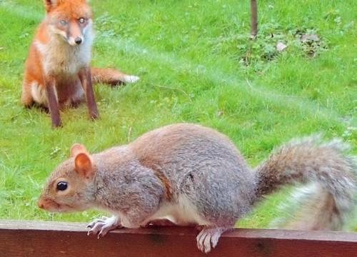 英松鼠敲窗求助 表情激萌深受网友喜爱-热点