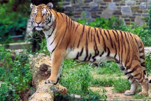 世界最差动物园 动物因战火饥饿等相继死去