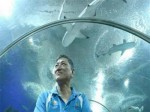 新加坡水族馆意外 资深潜水员不慎被魔鬼鱼刺中胸膛-热点