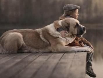 宠物离世可休丧假 工作方式改革的重要举措-热点
