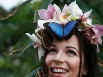 英国举行蝴蝶展 来自全球的蝴蝶让人饱眼福-热点