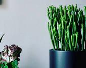 2000万的房子里应该放什么植物?