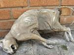 男子发现木乃伊猫 疑似因被卡主窒息-热点