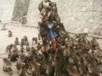 """泰国景区猴子泛滥 甚至会突然""""打劫""""游客-热点"""