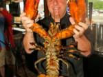 132岁老龙虾放生 如宠物一般耐心对待-热点