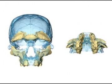 摩洛哥现智人化石 迄今最早的智人化石-热点