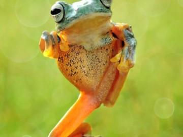 功夫树蛙打自卫拳 看起来像功夫大师-热点