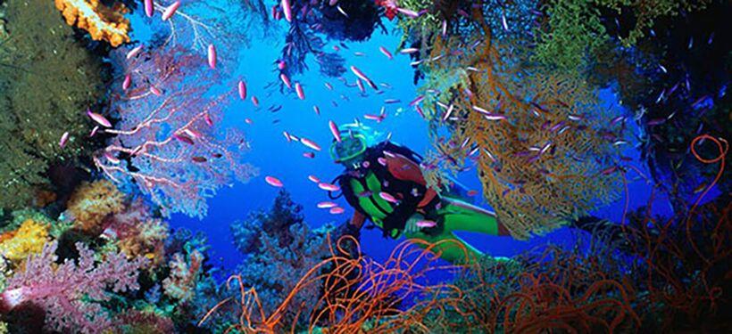 在道格拉斯港,您可以探索大自然未被开垦的热带奇观,或者在大堡礁体验神奇潜水