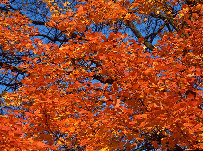 秋天就该去英国赏叶吧!
