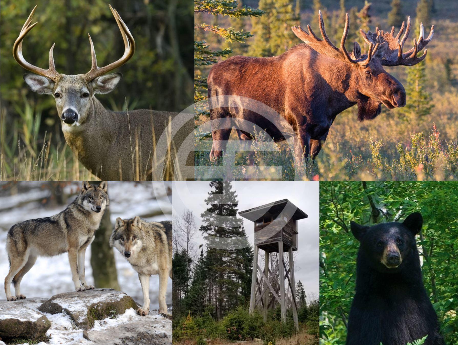 慕斯科卡森林的野生动物