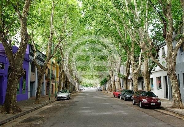 布宜诺斯艾利斯的Palermo