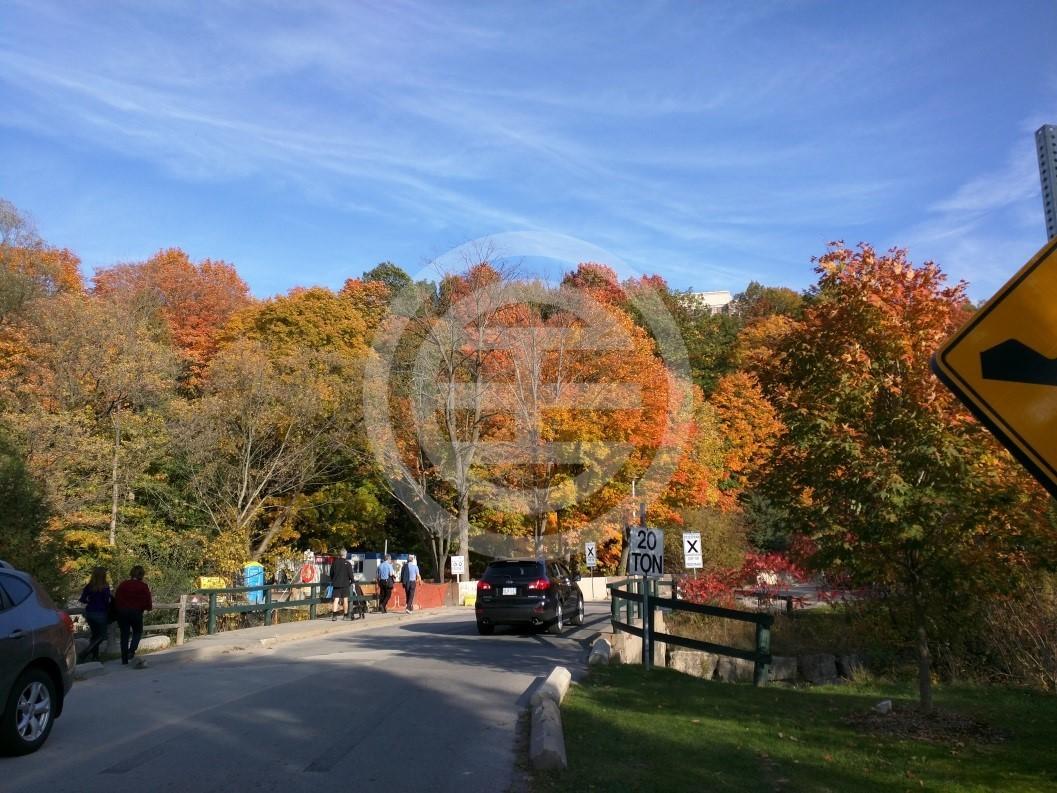 Sunnybrook公园(摄影/林虹言)