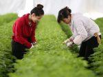 日本劳动人力短缺 安倍下令接收50万外国人