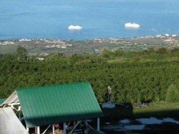 来夏威夷,实现你的农场主+移民美国梦!
