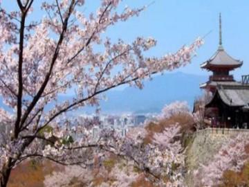 中国游客挤爆日景区  拉动日本旅游业经济发展