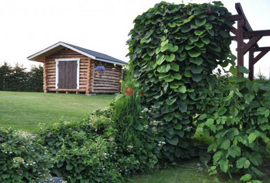 海外 | 芬兰乡村景观大宅:尽享清幽环境与纯净空气,可建更多房屋潜力巨大