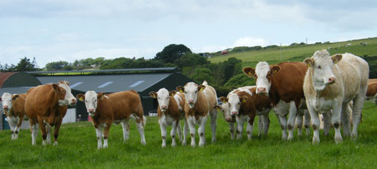 农场主应要尽到自己的义务,各方面都要符合政府规定