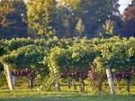 安大略省著名葡萄酒酿酒厂,拥有巨大价值和良好发展潜力   加拿大