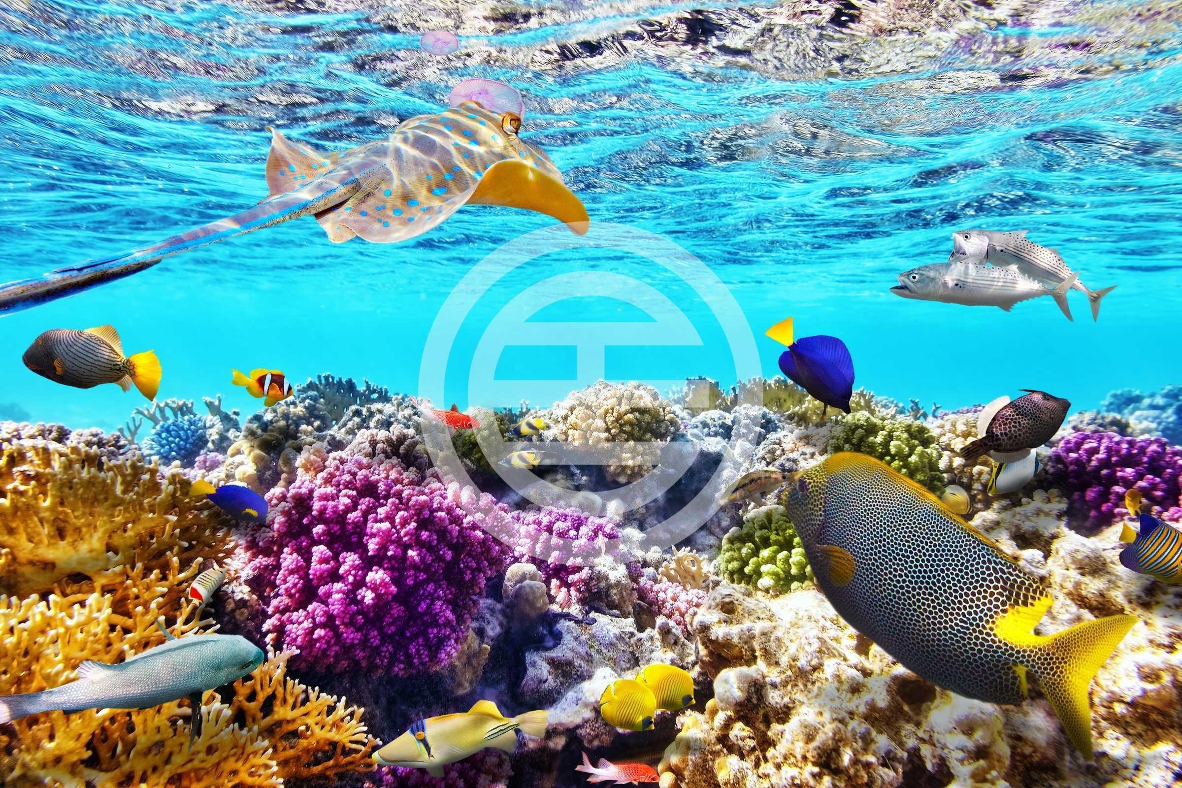凯恩斯紧邻著大堡礁,是游览世界上最大活体珊瑚礁群的最佳路线