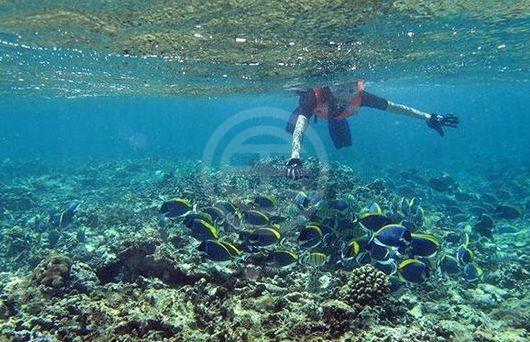 塞舌尔的海底世界