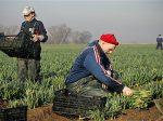 脱欧大限来临 离英欧盟劳动力规模扩大