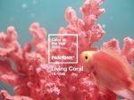 PANTONE权威发布2019年度色:珊瑚橙