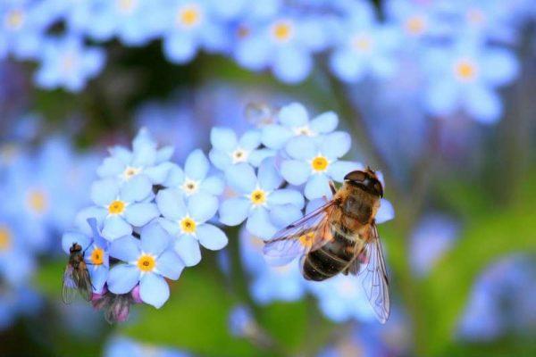 全球昆虫数目减少 自然生态可能会崩溃