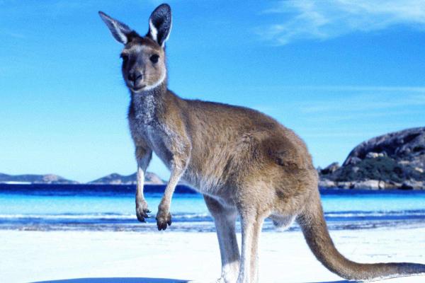 澳洲签证费用