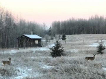 原始森林里的荒野木屋,不是电影里才有|居外精选